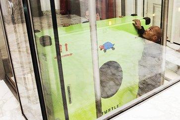 Image Result For Singapore Turtle Lifespan